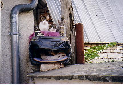 "abri du ""chats des toits"" - six chats"